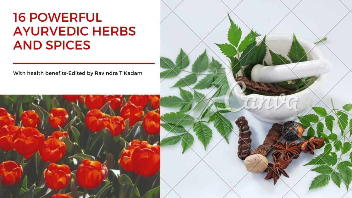Powerful Ayurvedic Herbs and Species